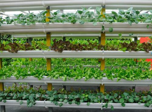 vertical-farm-vegetables-grown-using-fertigation-farming-system-660711280