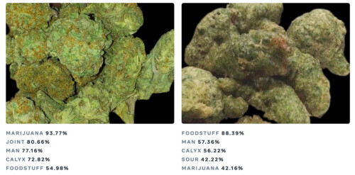 Image comparing broccoli to marijuana.