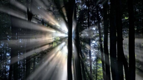 tech stories dark trees forest light rays sun